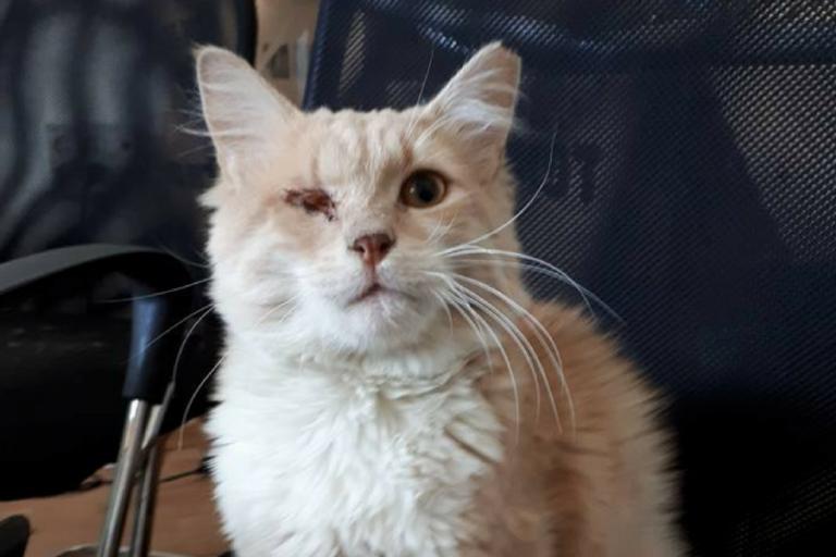 אסף החתול - לאחר טיפול בעמותת תנו לחיות לחיות זכה לחיים