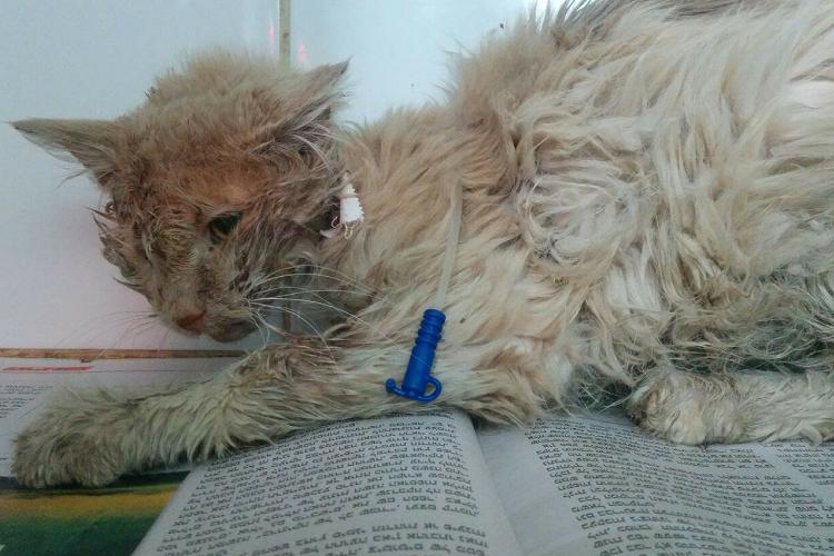 אסף החתול - הגיע במצב קשה לעמותת תנו לחיות לחיות