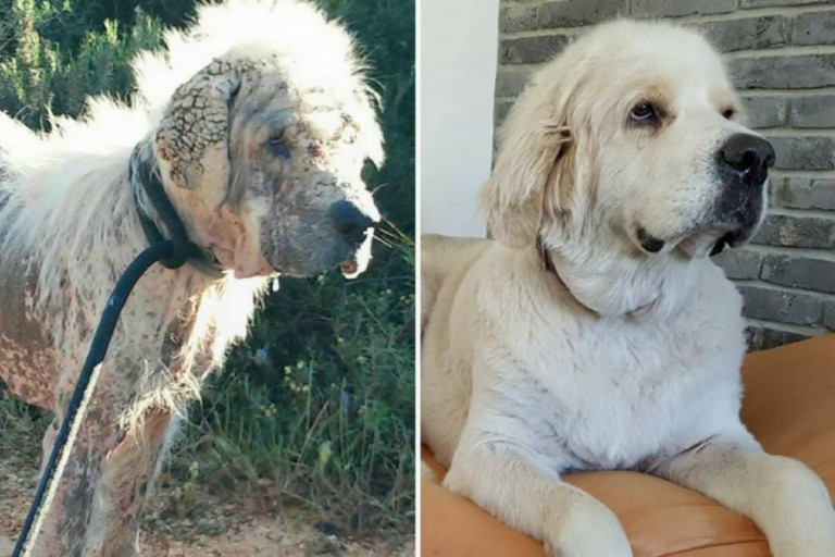 הכלב סימבה לאחר שטופל במרפאה של תנו לחיות לחיות