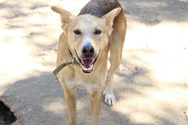 הכלב קייסי לאחר הטיפול בעמותת תנו לחיות לחיות